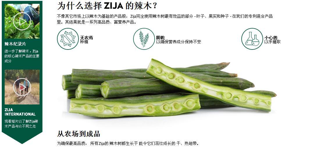 为什么选择 ZIJA 的辣木?